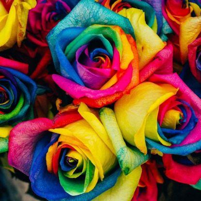 Multicolour Roses